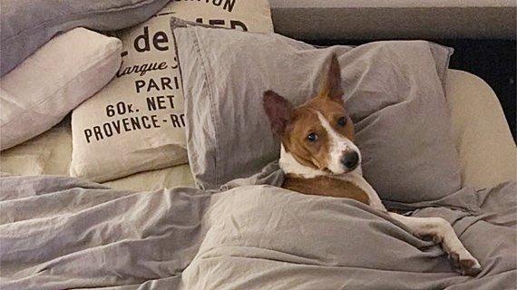 (Polski) Czy istnieją psy bezobsługowe?